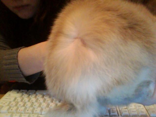У кролика перхоть на спине что делать