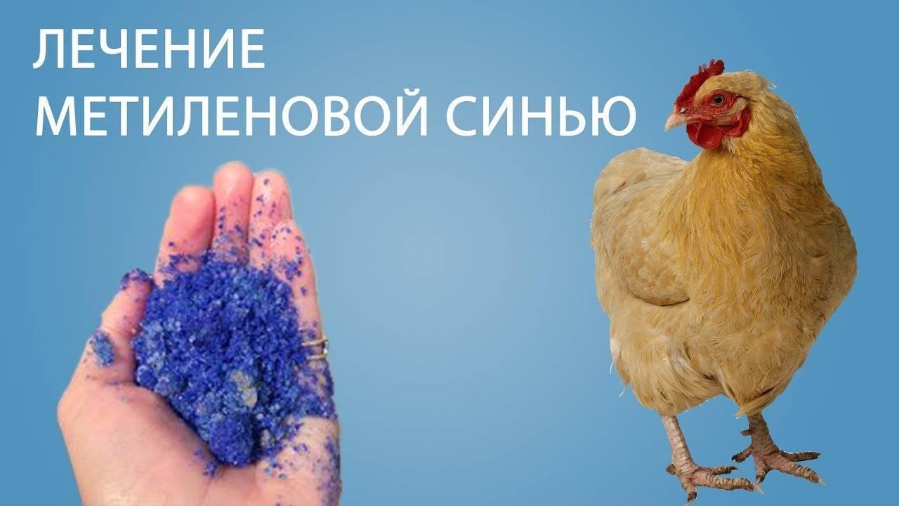 Почему цыплята падают на ноги: причины, лечение и профилактика