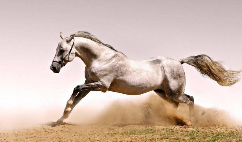 Бег лошади (аллюр): описание, способы и походка
