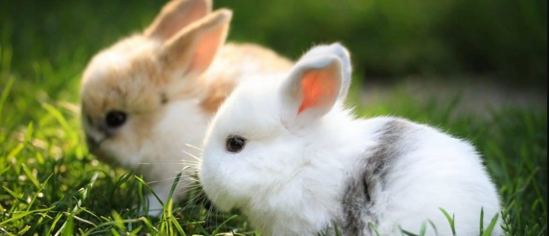 Дают ли кроликам кабачки