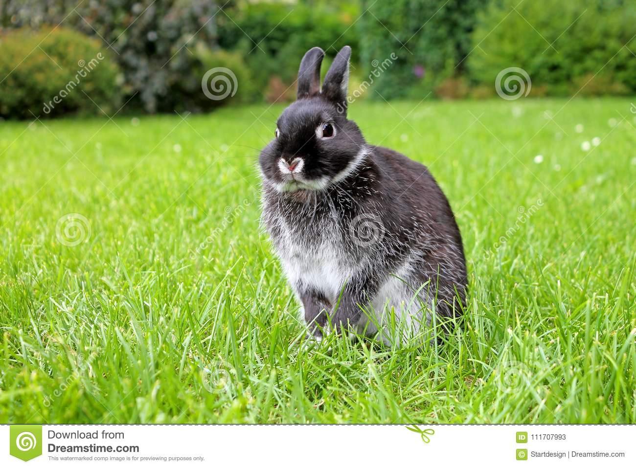 Кролик немецкий черный великан строкач - описание, разведение, фото и видео | россельхоз.рф