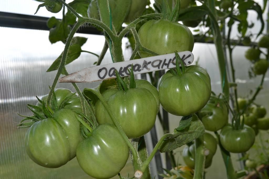 Редкие сорта томатов