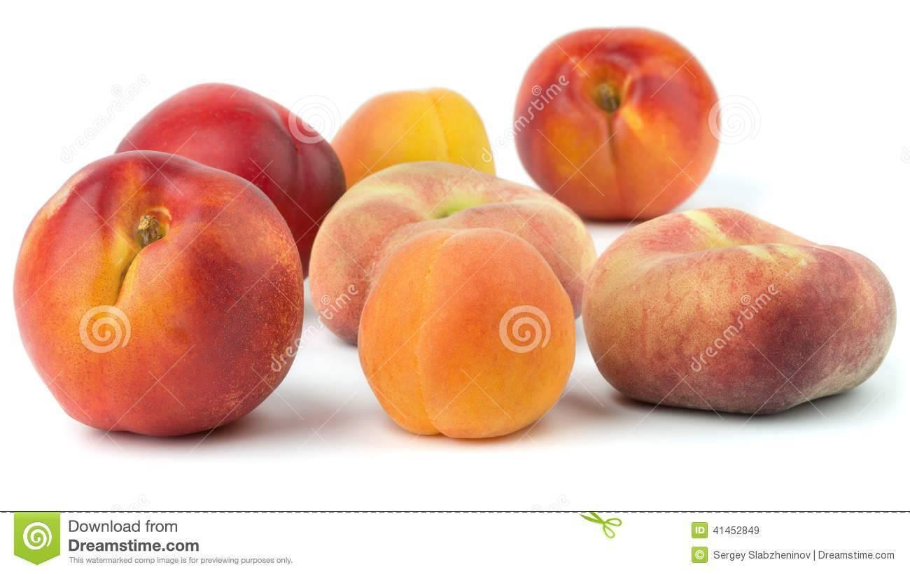 Шарафуга или гибрид сливы, абрикоса и персика