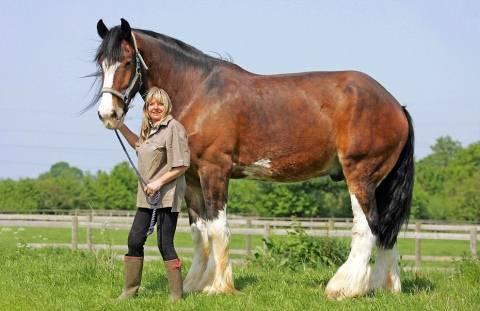 Сколько весит лошадь – методы определения и значение 2020