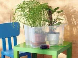 Как поливать розу в горшке: чем и как часто орошать комнатные декоративные растения в горшках в домашних условиях, сколько воды нужно, каковы особенности зимой?