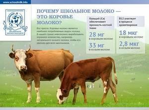 Сколько молока дает корова в день? породы коров. от чего зависит удой молока у коровы