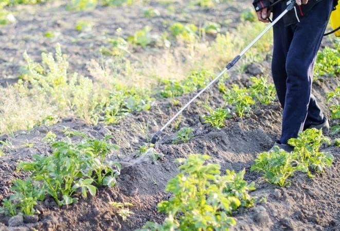 Удобрения кемира (фертика): разновидности, характеристики, использование