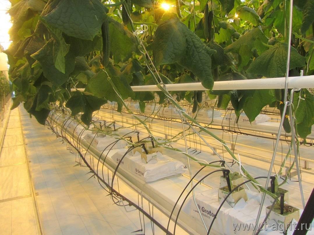 Капельный полив в теплице – как построить современную систему орошения (80 фото + видео)