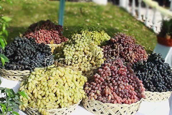 Виноград дамские пальчики: характеристики, отзывы садоводов, и 7 правил ухода