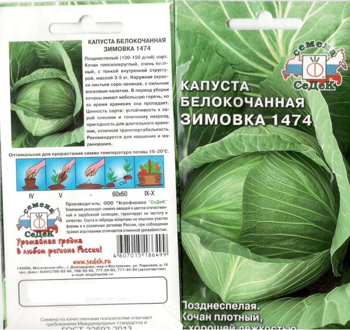 Описание и характеристика позднего сорта капусты зимовка