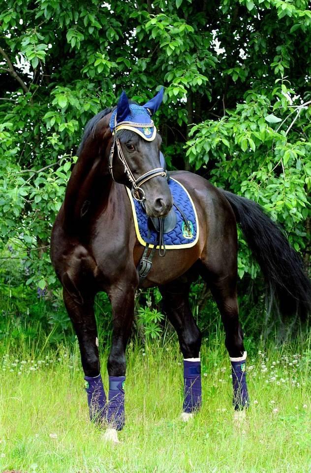 Амуниция для лошади (51 фото): сбруя и шоры, вожжи и другие элементы упряжи. стремена, удила и другие аксессуары для лошадей