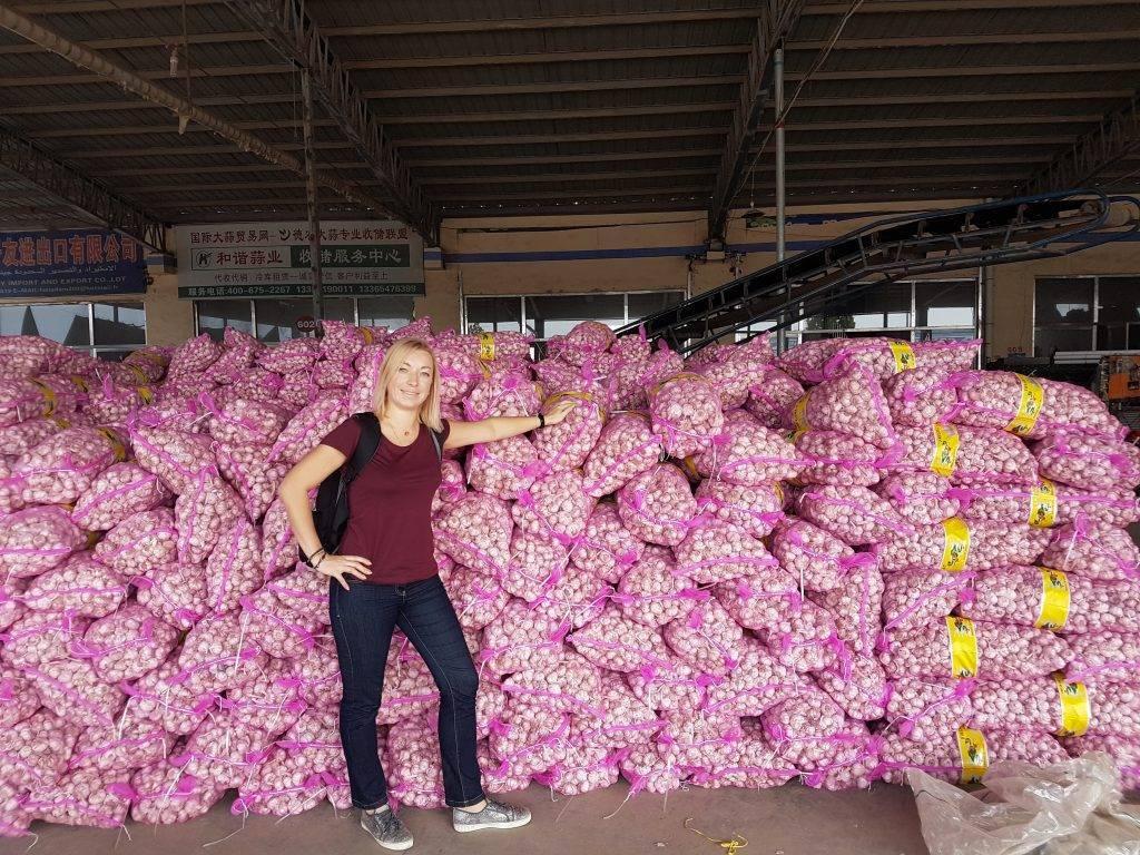 Как выращивают чеснок в китае