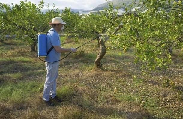 Чем и когда нужно опрыскивать яблоню весной?