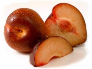 Характеристика гибрида сливы и абрикоса