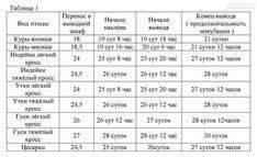 Инкубация куриных яиц в домашних условиях - температура и влажность