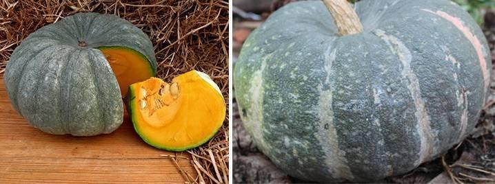 Тыква крошка: описание сорта, особенности выращивания и ухода