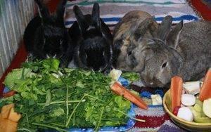 Можно ли кроликов кормить хлебом