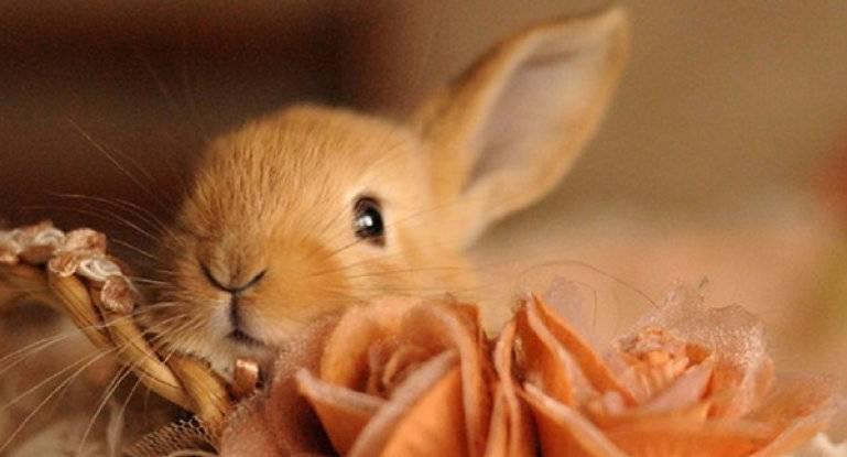 Чем кормить крольчиху после окрола чтобы было молоко