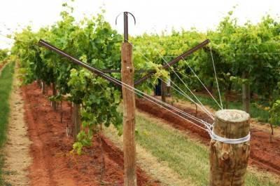 Шпалеры для винограда: разновидности, инструкции по установке