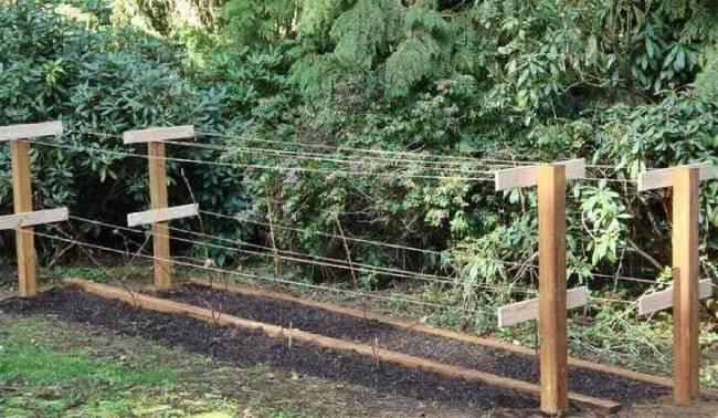 Как правильно подвязывать малину на садовом участке