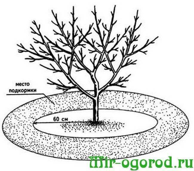 Подкормка груши осенью, сроки внесения удобрений