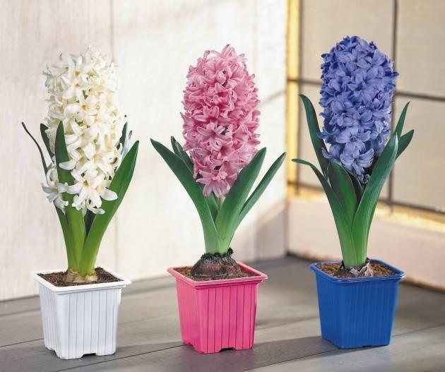 Домашние комнатные цветы и растения с названиями и фото