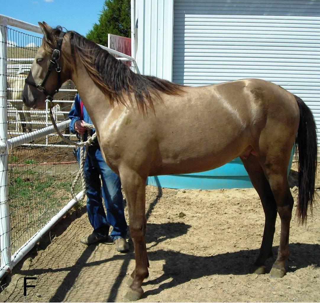 Самые распространенные масти лошадей с фотографиями и названиями - общая информация - 2020