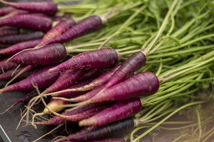Черная морковь: полезные свойства и применение