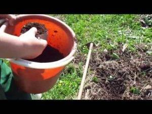 Выращивание картофеля без прополки и окучивания: как сделать с умом и что для этого нужно?