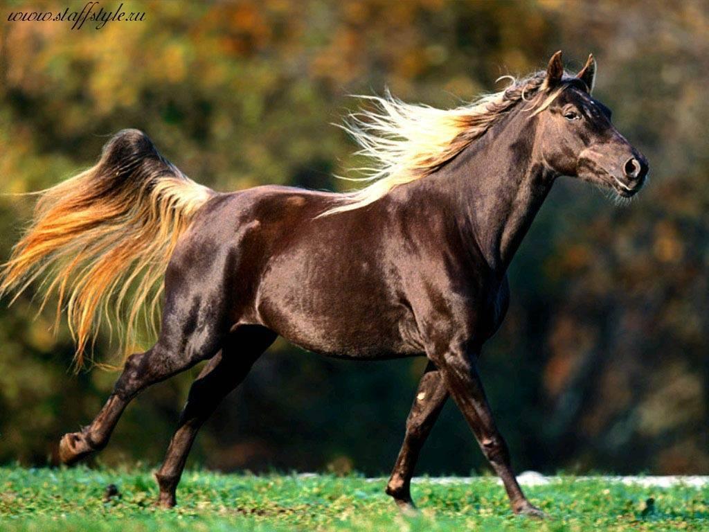 Лошади породы мустанг
