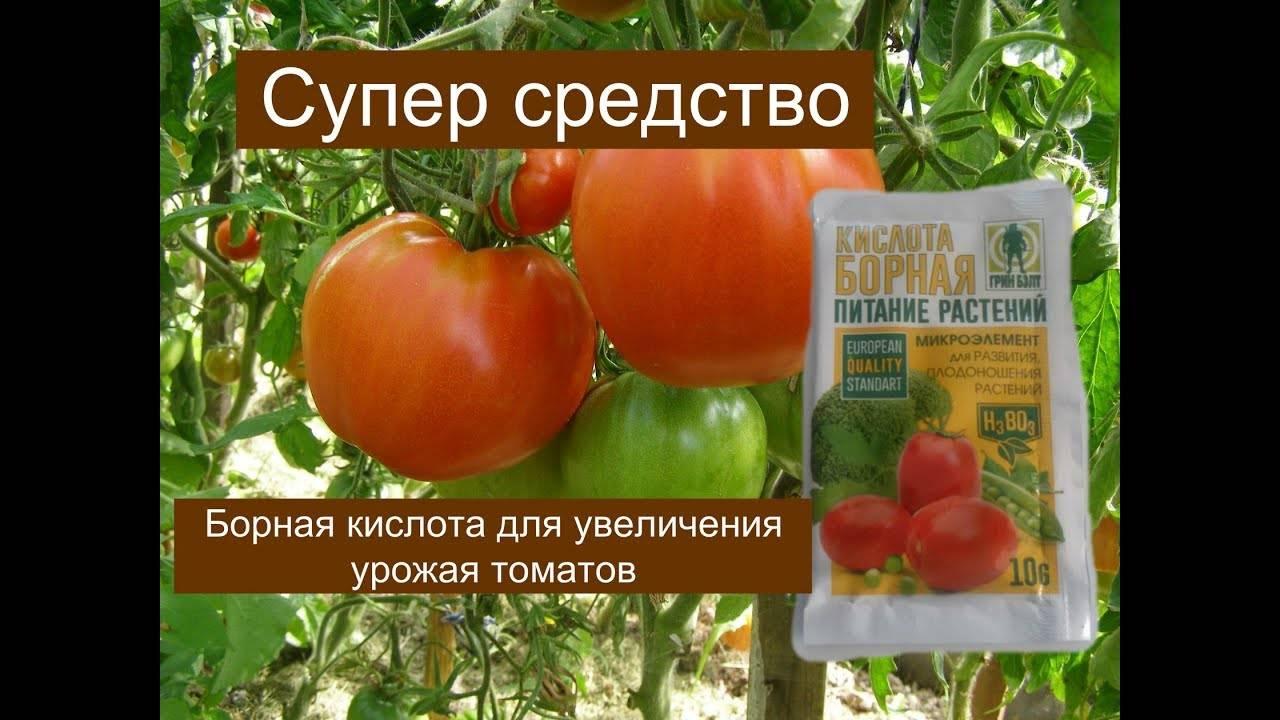 Борная кислота для томатов: способы применения как удобрения для сада и огорода. советы экспертов и подробная технология применения борной кислоты к помидорам (90 фото + видео)