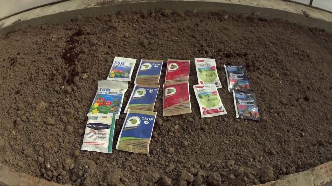 5 ошибок при выращивании смородины, которые лишают вас урожая