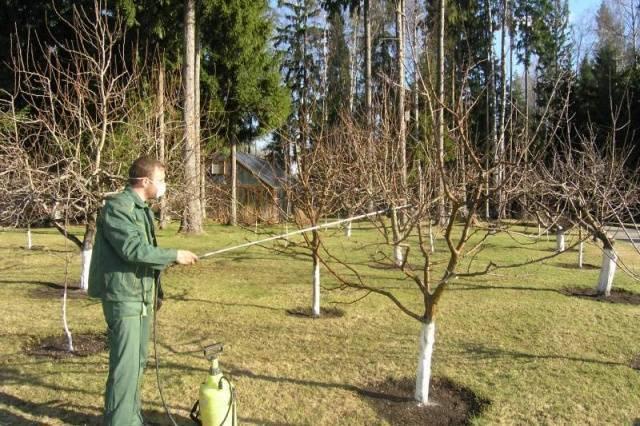 Все об опрыскивании плодовых деревьев от вредителей: когда и чем обрабатывать