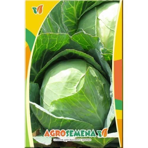 Особенности выращивания капусты вестри