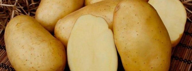 Как гарантированно защитить картофель от болезней и вредителей