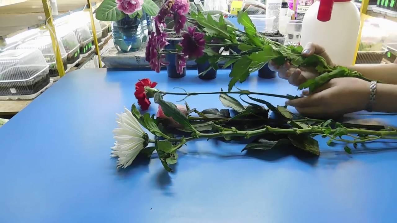 Как вырастить хризантему из букета: основные правила