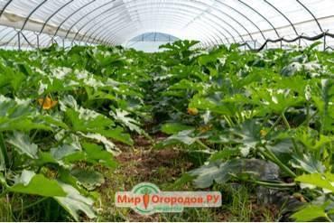 Парник (117 фото): садовые теплицы под пленку «кабачок», «огурчик» и «улитка», как выбрать для перцев, конструкции от компании «воля», отзывы