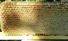 Должен ли засахариваться мед и когда?