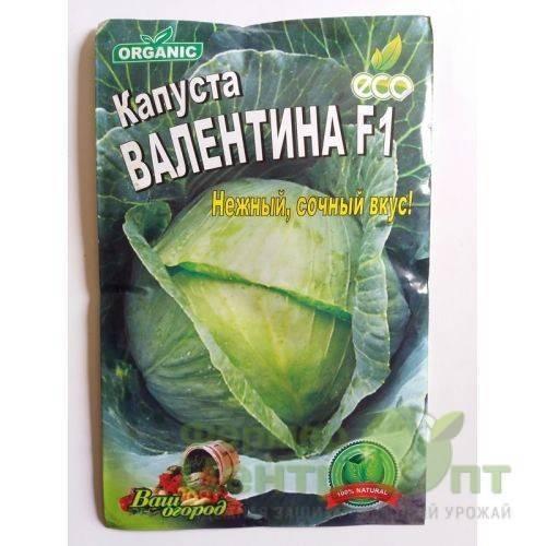Капуста сорта валентина: внешний вид овоща, его подробное описание, а также фото