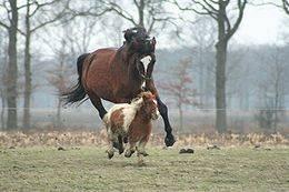 Сколько весит лошадь: средний вес по породам