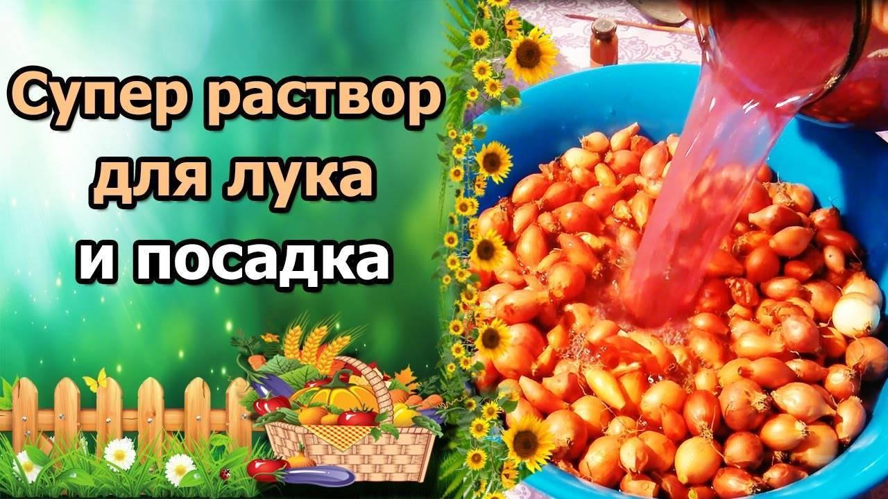Как подготовить лук-севок к посадке весной