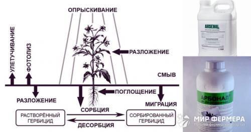 Как уничтожить дерево не срубая его