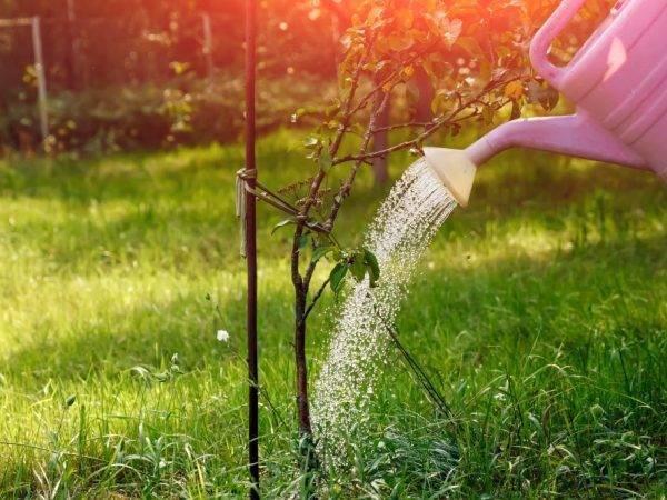 Чем удобрить яблоню и как защитить урожай от вредителей?