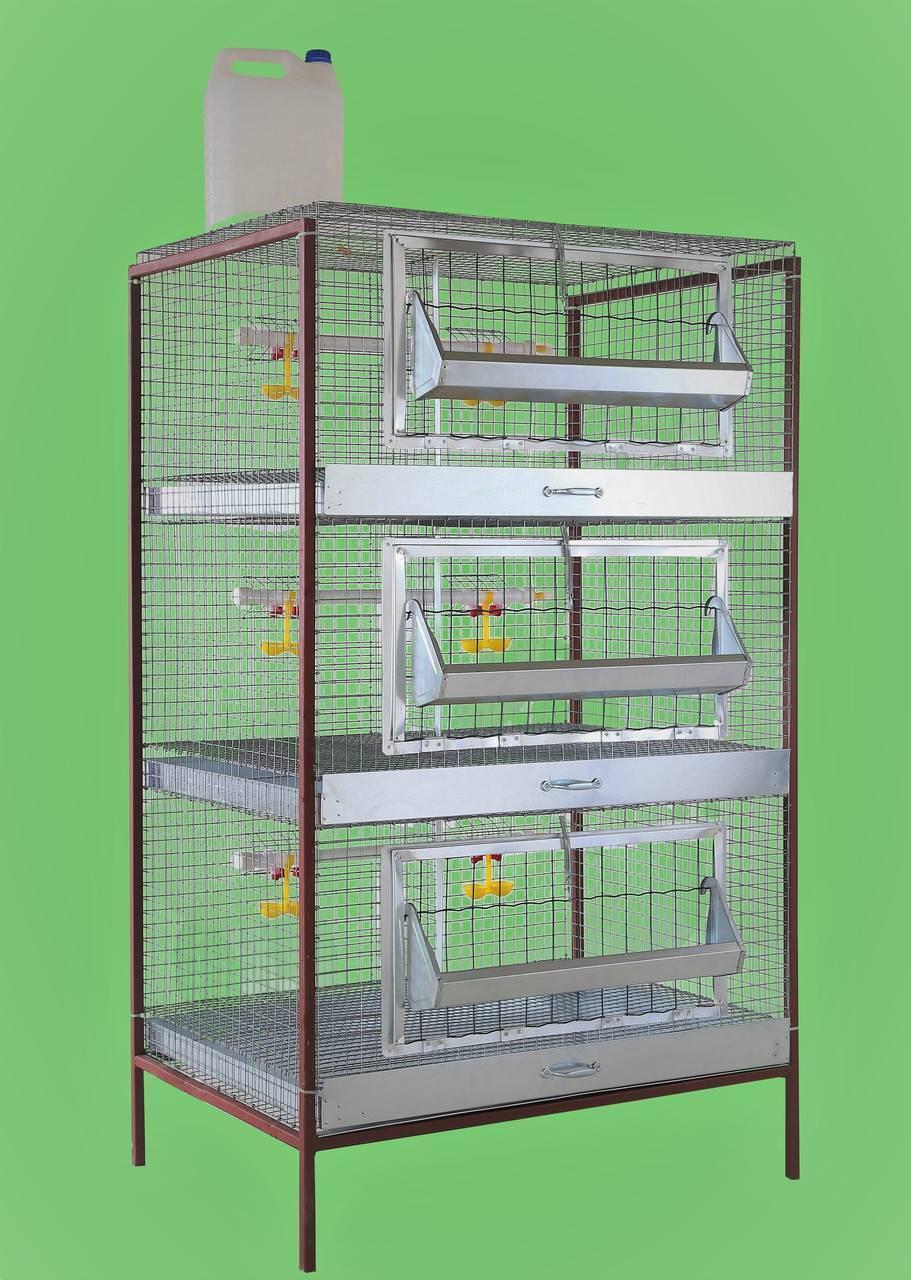 Клетки для бройлеров (47 фото): размеры. как сделать клетки для выращивания цыплят своими руками по чертежам в домашних условиях?