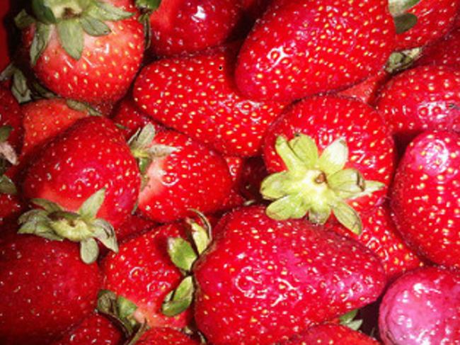 Почему пропадает клубника на огороде. у клубники сохнут ягоды: что это значит и что с этим делать
