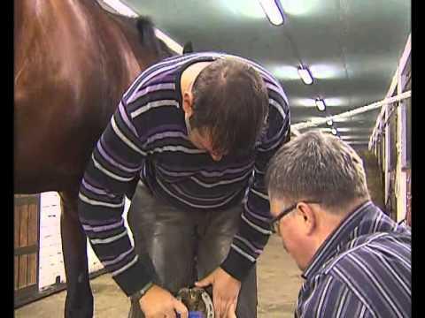Зачем подковывают лошадей?