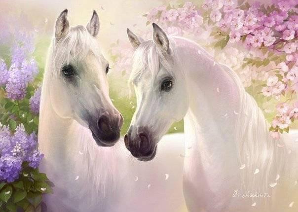 Самые красивые породы лошадей: описание