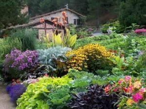Клумба непрерывного цветения: правила создания и подбор растений