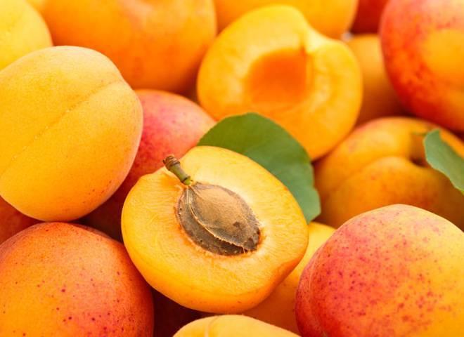 Персиковый абрикос: характеристики, посадка и выращивание