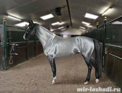 Краткая информация о всех мастей лошадей